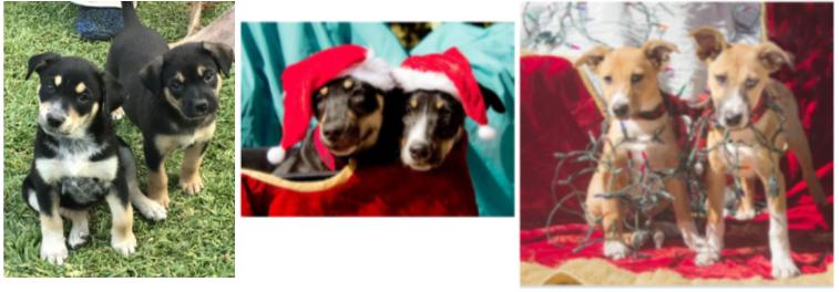 Ranch Puppy Adoption Day Saturday, 6 Januaary ADpups6jan_001.png.7a56fc1e1111918bc69c35e712b9f80e