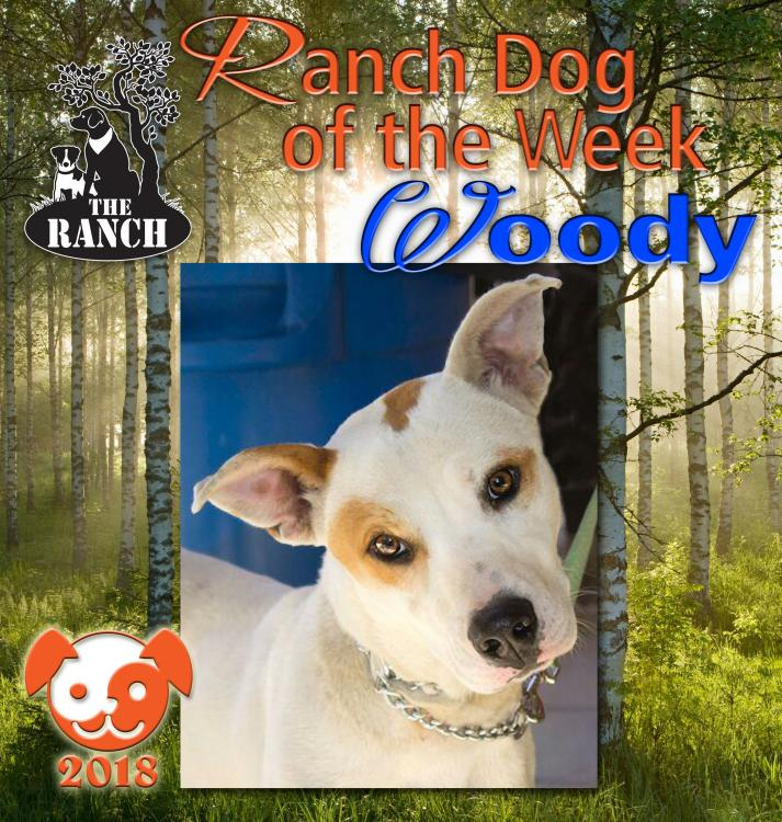 Ranch Dog of the Week – Don't Bark Up the Wrong Tree... RDOW_WOODY.thumb.jpg.c345d96829e8beccb858a5ae8f4187d3