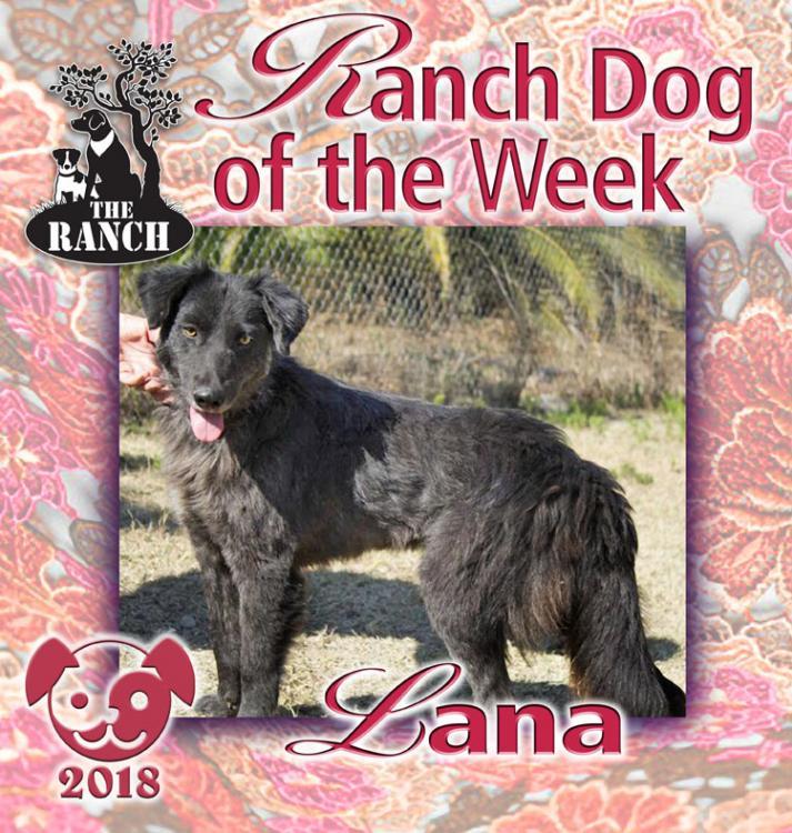 Ranch Dog of the Week – Lovely Lana 5a8ceed56dc1c_RDOW_LANA750.thumb.jpg.77906eccbb5a1c35eb7b9dc747a05ba8