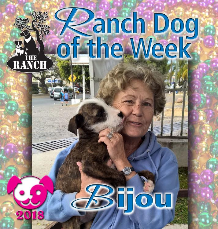 Ranch Puppy of the Week – BIJOU, Your Very Special Gem! RDIW_BIJOU.thumb.jpg.8939ea302f34f3a0b9f88ef42ac2f05f