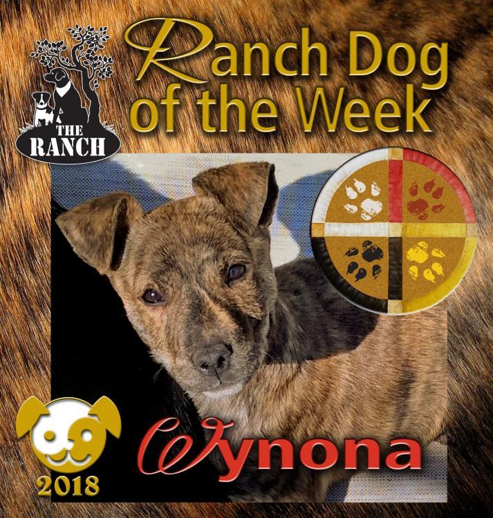 Ranch Puppy of the Week – Wynona, Whimsical and Wonderful! RDOW_WYNONA.thumb.jpg.4d06d5c7e0d00b5bb5af27b5fe3296e3
