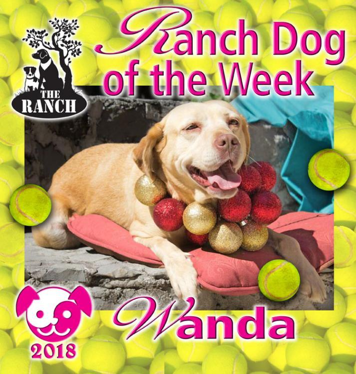 Ranch Dog of the Week – WACKY WANDA! 5a9f7d41869d2_RDOW_WANDA750.thumb.jpg.00fe0dc946fa85e31ef1c108b29e5cb1