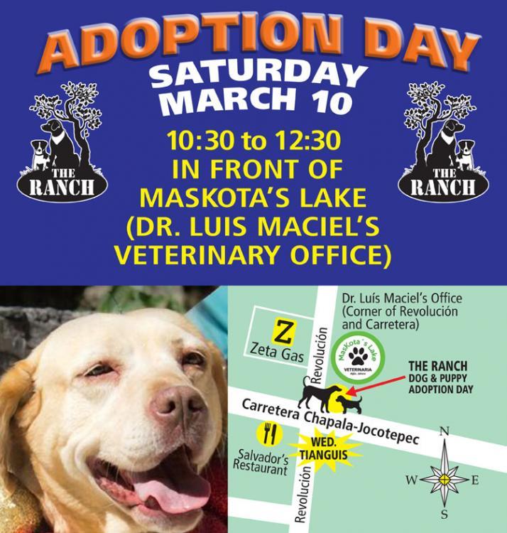 Ranch Dog Adoption Day this Saturday - 10 March 5aa0c7e7181bc_ADPROMOSAT10mar750.thumb.jpg.513f4307b91315f754273323f7085fe6