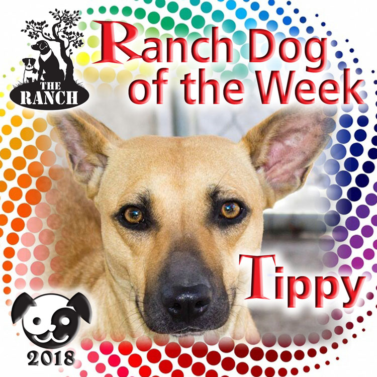 Ranch Dog of the Week – TIPPY, TIP TO TOE! 5ab34799a76d1_RDOW_TIPPY750.jpg.1a7603cf049be7ce38923629a153ceed