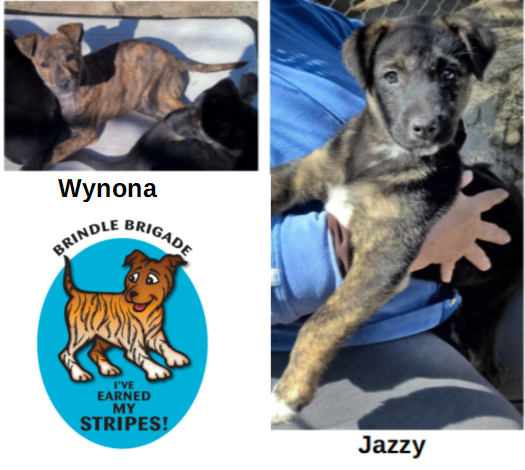 Ranch Dog Adoption Day this Saturday - 10 March WynJazzy.png.0ed56cee73375daf14f744a1a652aa2d