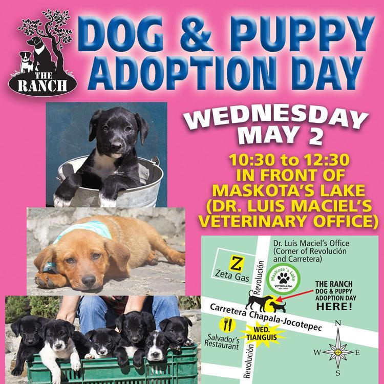 Ranch Puppy & Dog Adoption Day Wednesday 2 May 1535469215_ADPROMOWEDFB7502may.jpg.475c1b2ae7db7ac10d4f54378e8e7f97