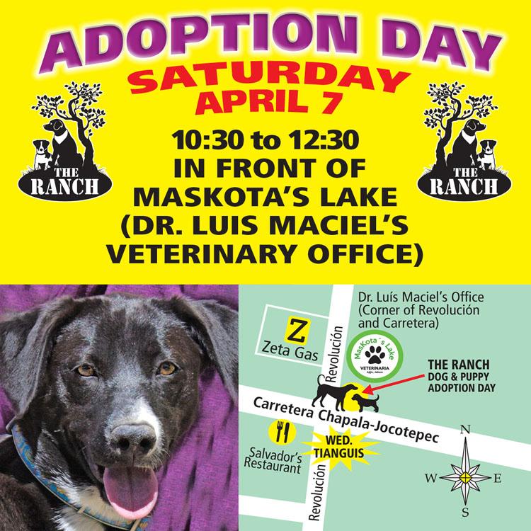 Ranch Dog Adoption Day this Saturday - 7 April 5ac5987eeec1a_ADPROMOSATFB750-Apr7.jpg.d00dd3ebce408bf12f3d840276f21974