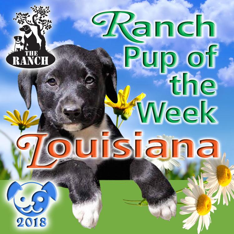 Ranch Pup of the Week – Love-bug Louisiana 5ad927f980849_RDOW_LOUISIANA750.jpg.1135ccd5db38a778579c053f014ef98f