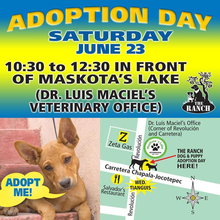 Ranch Puppy & Dog Adoption Day this Saturday - 23 June 1170265302_ADPROMOSAT750-23jun.jpg.2a3050035a6f84d7c5ecb9d080ea8948