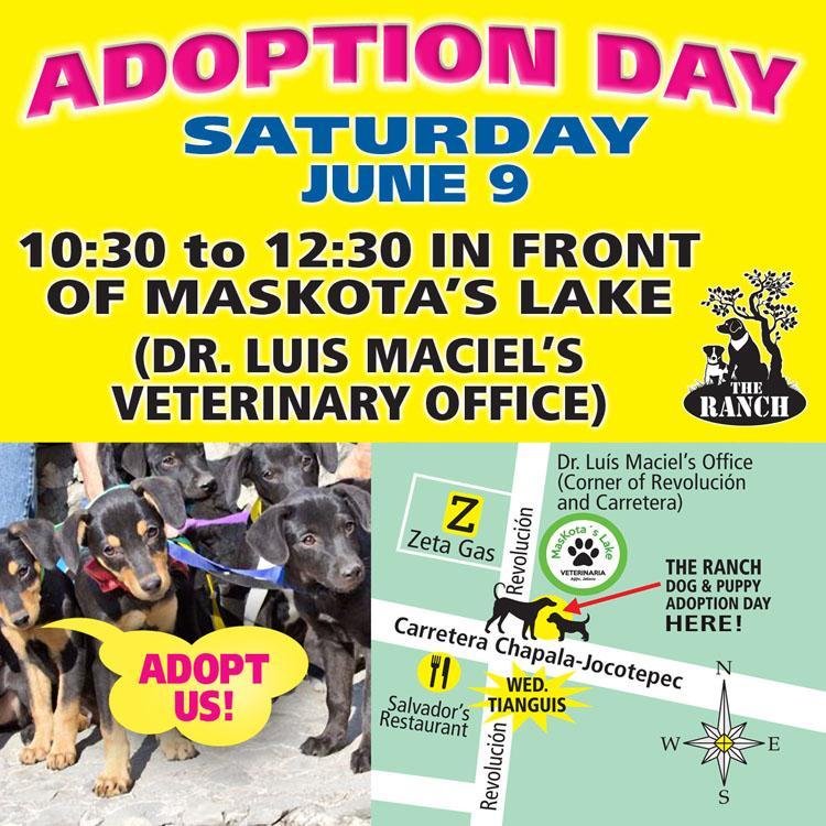 We're Back ! Ranch Puppy & Dog Adoption Day this Saturday - 9 June 157683232_ADPROMOSATFB750jun9.jpg.17da59a0d95b96349272374bdd4f689e