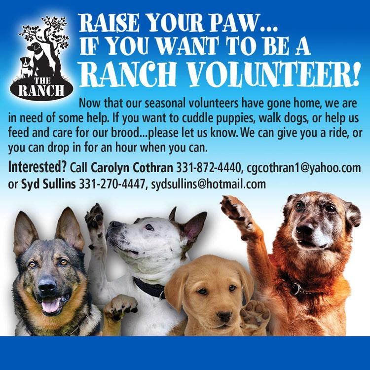 Raise your paw if you want to be a Ranch volunteer! 1639771738_BEAVOLUNTEER1750.jpg.427bd495194cc23a6d0d4a0e3ceeb9d6