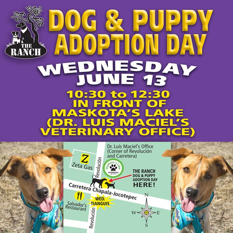 Another Chance! Ranch Puppy & Dog Adoption Day this Wednesday, 13 June 421068768_ADPROMOWED750-jun13.jpg.9268a49ea901638b44097d81e88ca63c