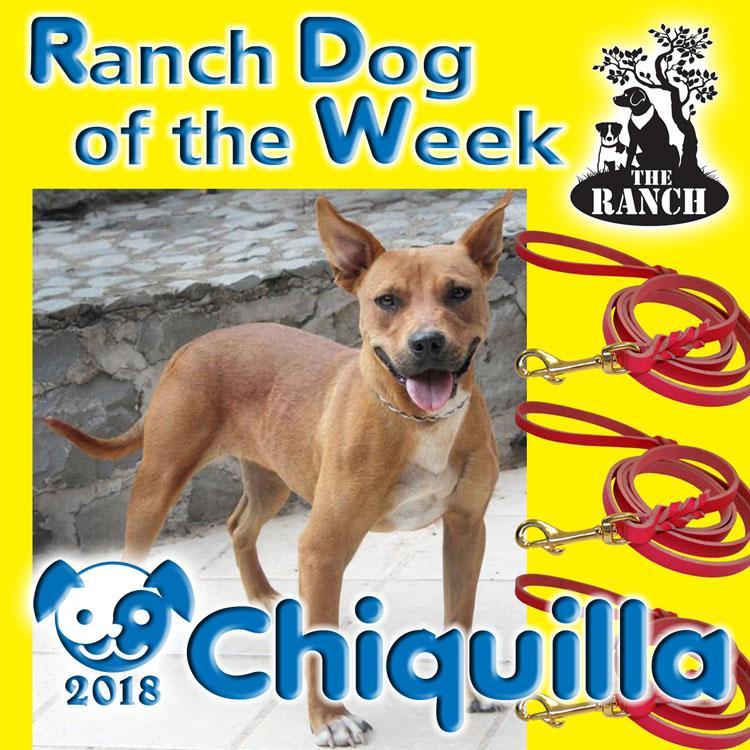 Ranch Dog of the Week – Charming Chiquilla 663112893_RDOW_CHIQUILLA750.jpg.de8c9c0b654d1596efa3e1eb591255b2