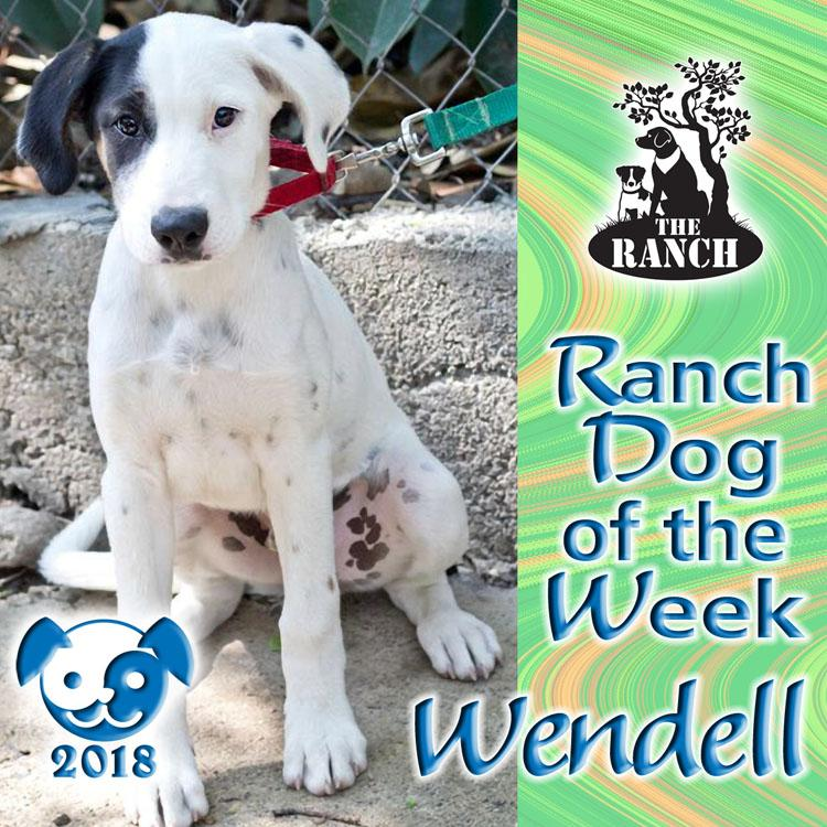 Ranch Pup of the Week – Wendell, The Mystery Dog 890393381_RDOW_WENDELL750.jpg.dc60574f6502b07013d2005831903f8d