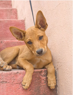 We're Back ! Ranch Puppy & Dog Adoption Day this Saturday - 9 June Luda.png.ee452b0d7ad2d816ec7843dfc94ef8b9