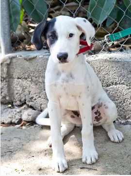 We're Back ! Ranch Puppy & Dog Adoption Day this Saturday - 9 June Wendell.png.f6f6db22fe685c67589e0034ae25f587