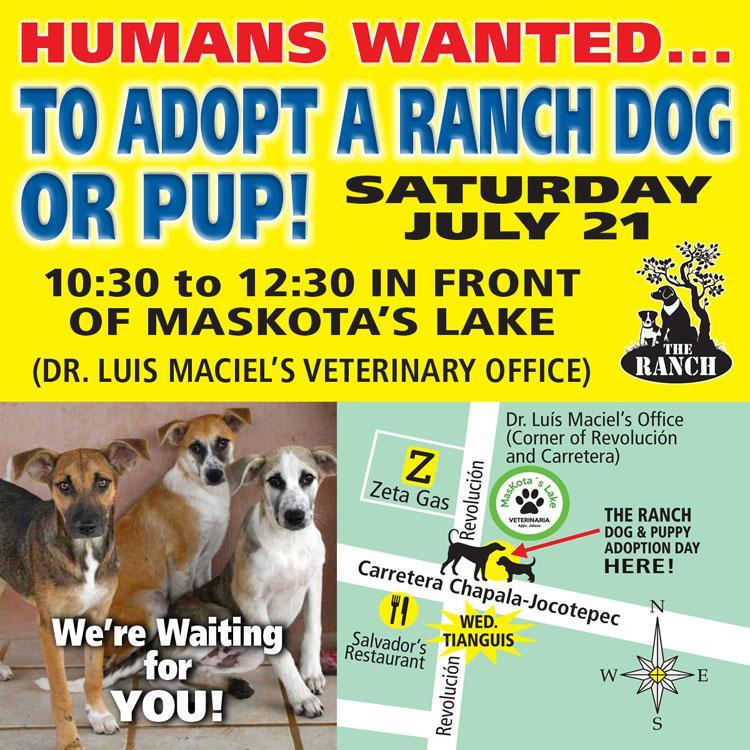 Ranch Puppy & Dog Adoption Day this Saturday - 21 July 908962053_ADPROMOSAT750-21jul-1.jpg.cfed98d861cd0277b2eb7af7e89e472e