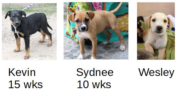 Ranch Puppy & Dog Adoption Day this Saturday - 21 July ADpups21jul-2.png.a68a6099fc5b32cbaa2a87ba047f3d17