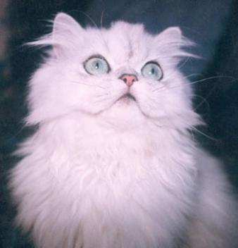 8 août : Journée internarionale du chat — le chat dans toute sa beauté 1192727163c