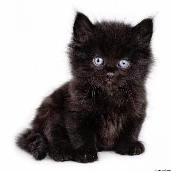 Thorny ♦ Vous pouvez passer commande pour des gifs et des cookies ♫ - Page 18 Photo-chaton-noir-6