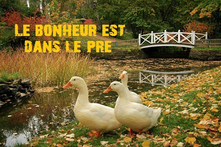 Le Fransalien  Fin_benache