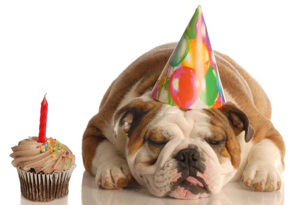 Happy Birthday ftrplt Bulldog-birthday