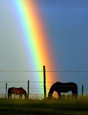 Naten e mirë  Regenbogen