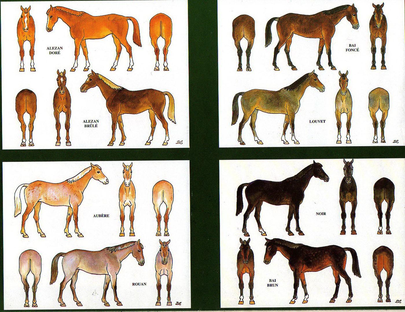 Les robes des chevaux par Eugène lelièpvre  ChevauxColor002_J