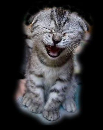 ملف عن تربية القطط  وبعض الحيوانات الاخرى  Minou