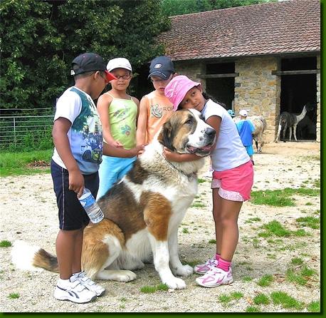 [Sondage] Top 10 des chiens les plus impressionants Lamasvisites10a