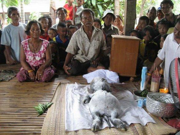 Strange Creature Found in Thailand Strange-creature-found-01