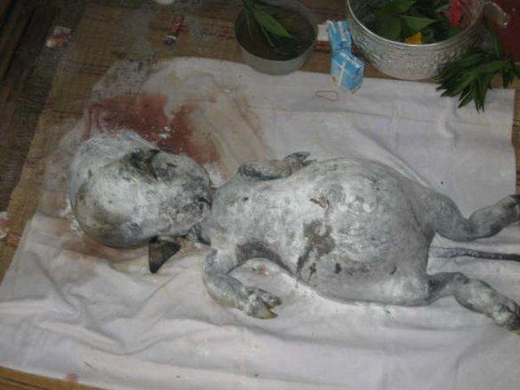 Strange Creature Found in Thailand Strange-creature-found-04