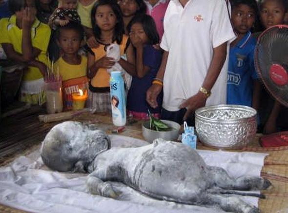 Strange Creature Found in Thailand Strange-creature-found-07