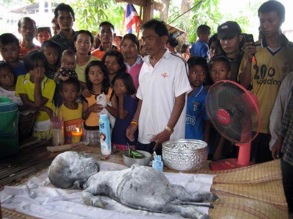 Strange Creature Found in Thailand Strange-creature-found-08