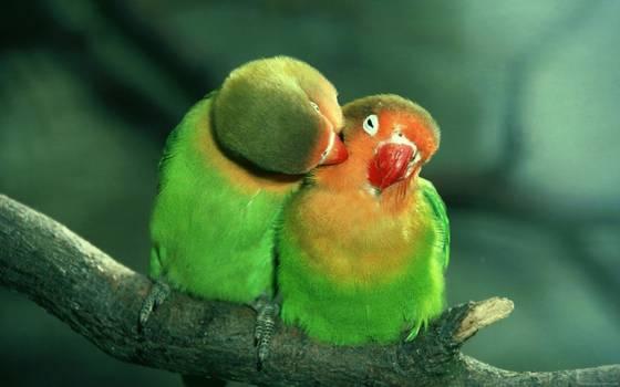 Bonne Saint-Valentin à toutes et tous ! (Même si on est seul) La-Saint-Valentin-des-oiseaux-