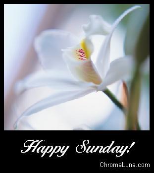 Deseos positivos para todos. Happy_sunday_white_flower
