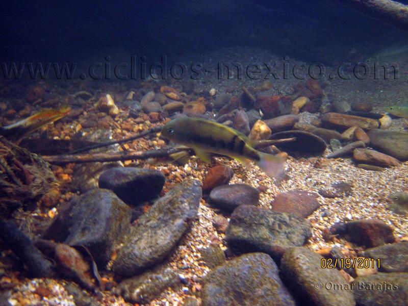 Reseña del viaje al Río Almoloya, Oaxaca. IMG_0085%20%287%29
