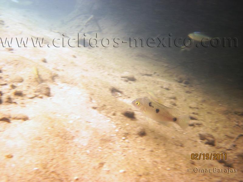 Reseña del viaje al Río Almoloya, Oaxaca. IMG_0085%20%289%29