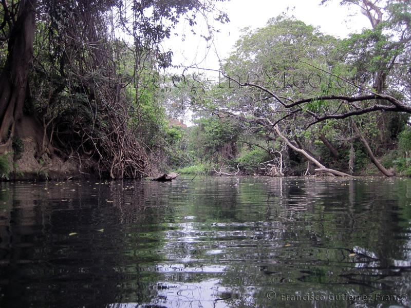 Reseña del viaje al Río Almoloya, Oaxaca. IMG_3045%20%2811%29
