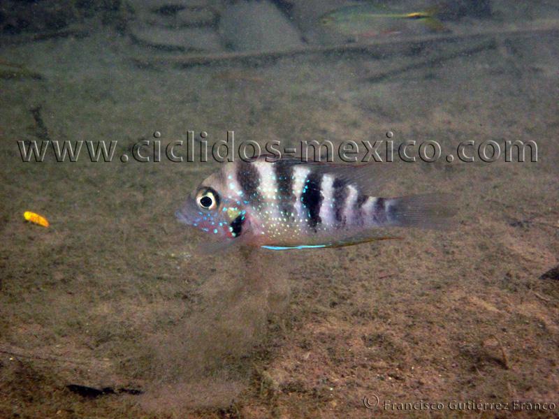 Reseña del viaje al Río Almoloya, Oaxaca. IMG_3045%20%2842%29