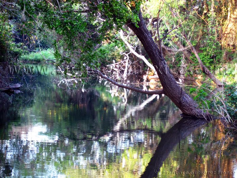 Reseña del viaje al Río Almoloya, Oaxaca. IMG_3045%201%2879%29