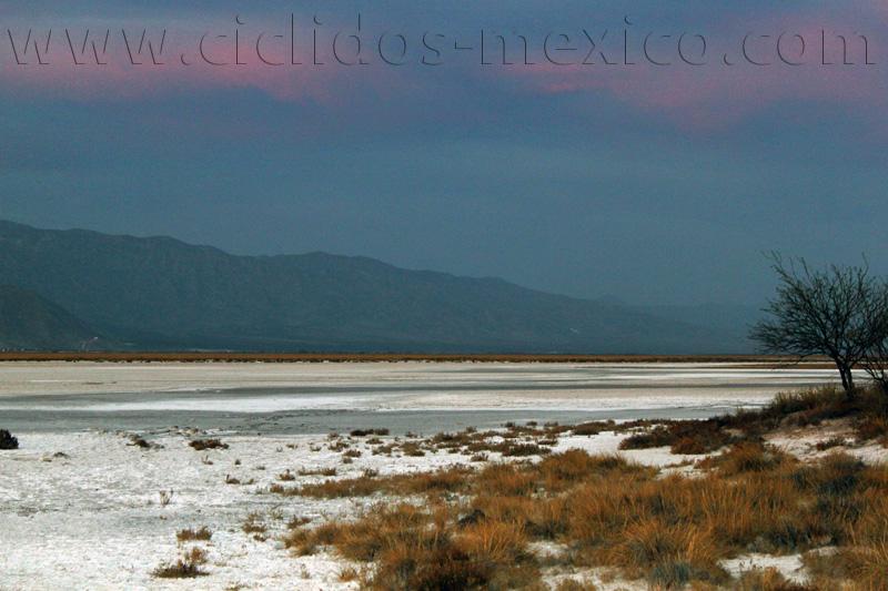 oasis du désert de la Becerra %2853%29