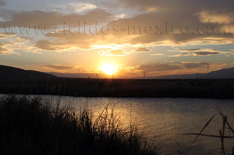 oasis du désert de la Becerra %2854%29