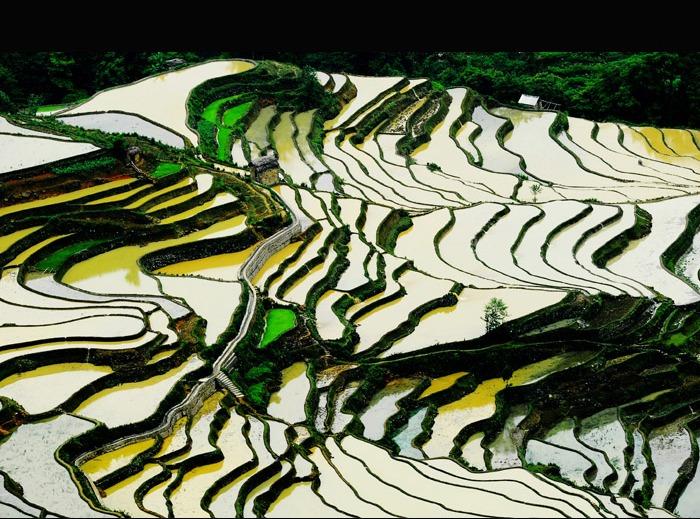 que suis je d'Ajonc le 10 août trouvé par Cathy Yuanyang-2