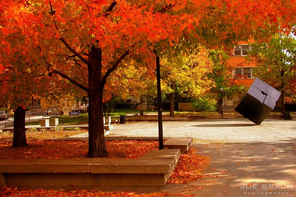 Autumn Joebraun_annarbor103