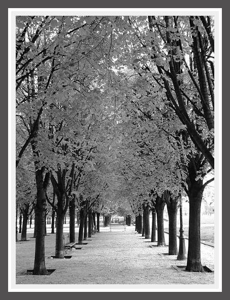 Crno-bele slike - Page 4 73583d1293928778-black-white-photos-zii2