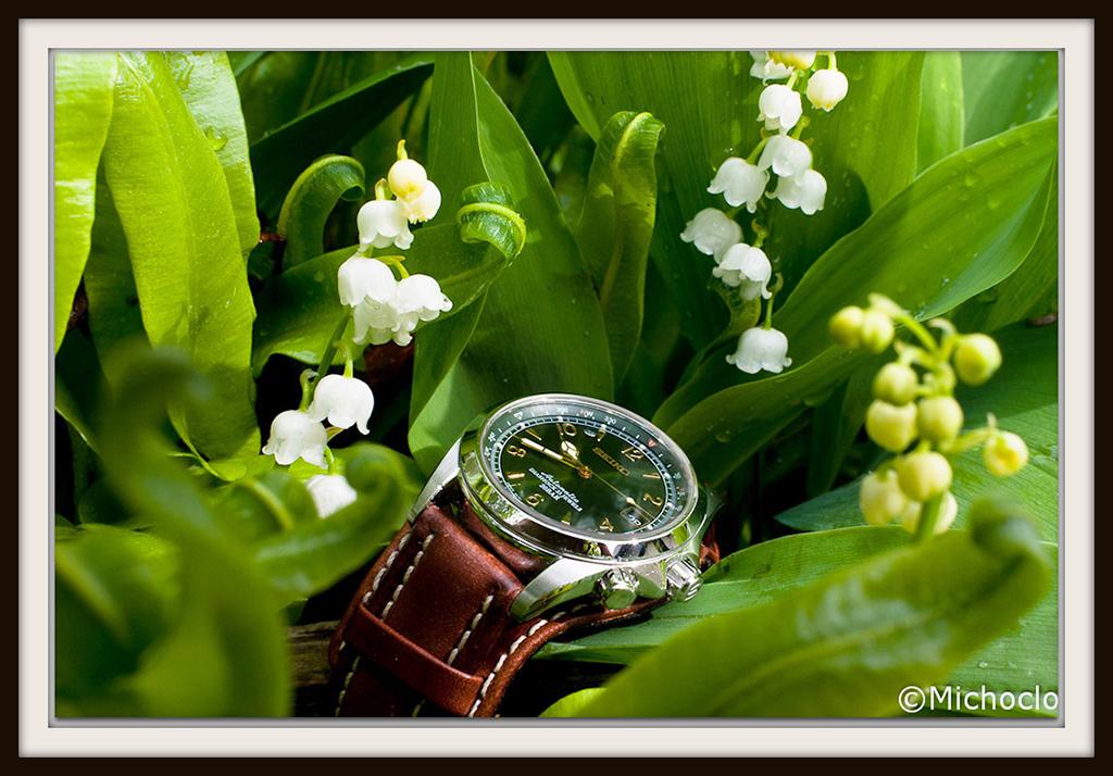 Votre montre du jour - Page 4 Alpinist_muguet