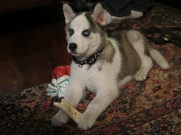 Jasparr puppy (updated 10/6/2013) Puppy-5
