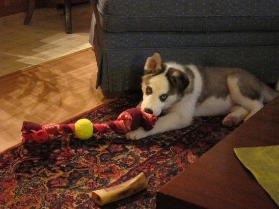 Jasparr puppy (updated 10/6/2013) Week10-05