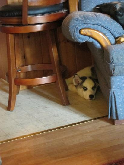 Jasparr puppy (updated 10/6/2013) Week10-06